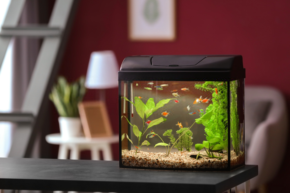 Best Freshwater Aquarium Fish Combination 2020 | Top 5 Aquariums Reviewed | Buying Guide